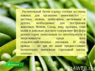 Растительный белок гороха состоит из очень важных для организма аминокислот — ци