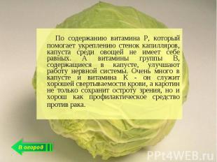 По содержанию витамина Р, который помогает укреплению стенок капилляров, капуста