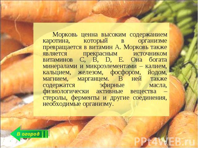 Морковь ценна высоким содержанием каротина, который в организме превращается в витамин А. Морковь также является прекрасным источником витаминов С, В, D, E. Она богата минералами и микроэлементами – калием, кальцием, железом, фосфором, йодом, магние…