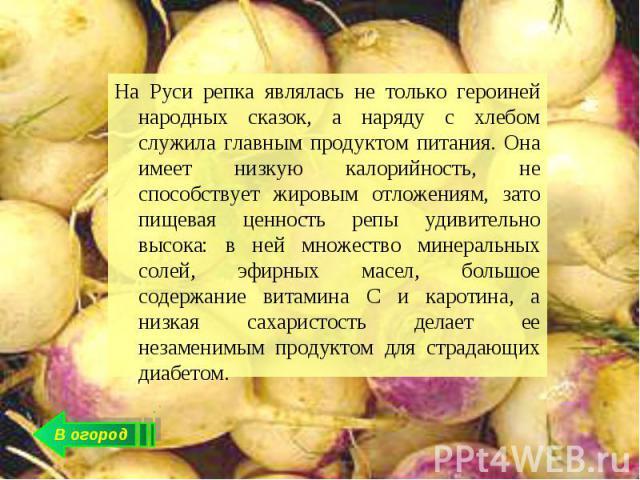 На Руси репка являлась не только героиней народных сказок, а наряду с хлебом служила главным продуктом питания. Она имеет низкую калорийность, не способствует жировым отложениям, зато пищевая ценность репы удивительно высока: в ней множество минерал…
