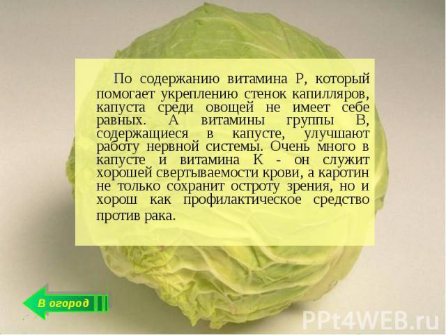 По содержанию витамина Р, который помогает укреплению стенок капилляров, капуста среди овощей не имеет себе равных. А витамины группы В, содержащиеся в капусте, улучшают работу нервной системы. Очень много в капусте и витамина К - он служит хорошей …