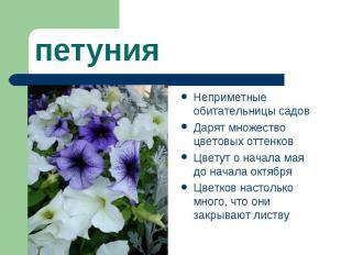 петуния Неприметные обитательницы садов Дарят множество цветовых оттенков Цветут