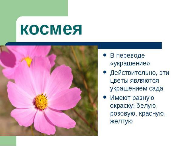 космеяВ переводе «украшение» Действительно, эти цветы являются украшением сада Имеют разную окраску: белую, розовую, красную, желтую