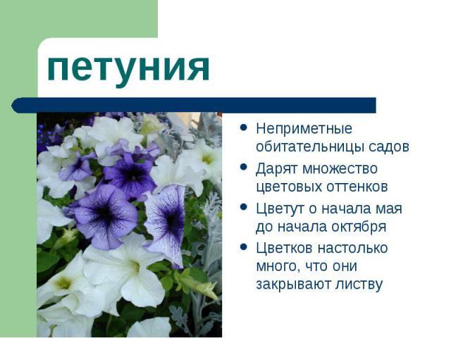 петуния Неприметные обитательницы садов Дарят множество цветовых оттенков Цветут о начала мая до начала октября Цветков настолько много, что они закрывают листву