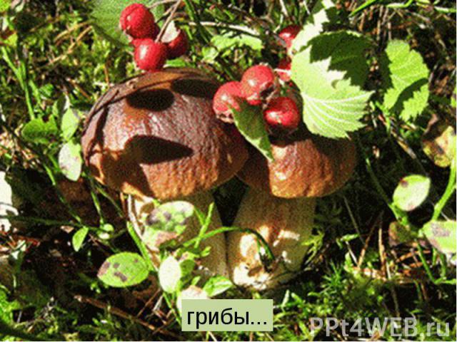грибы...