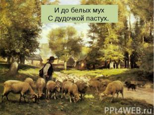 И до белых мух С дудочкой пастух.