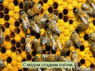С мёдом сладким пчёлки,