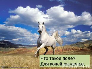 Что такое поле? Для коней раздолье,
