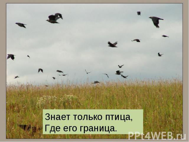 , ,Знает только птица, Где его граница.