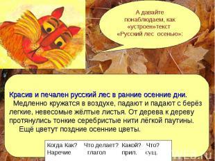 А давайте понаблюдаем, как «устроен»текст «Русский лес осенью»: Красив и печален