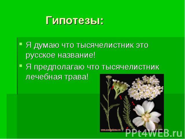 Гипотезы: Я думаю что тысячелистник это русское название! Я предполагаю что тысячелистник лечебная трава!