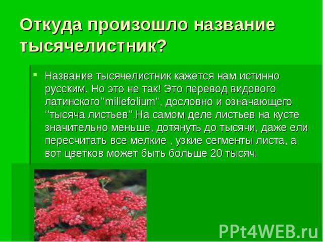 """Откуда произошло название тысячелистник? Название тысячелистник кажется нам истинно русским. Но это не так! Это перевод видового латинского''millefolium"""", дословно и означающего ''тысяча листьев''.На самом деле листьев на кусте значительно меньше, д…"""
