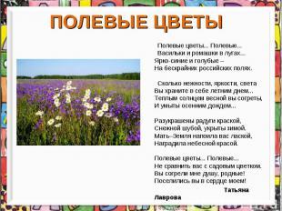 ПОЛЕВЫЕ ЦВЕТЫ Полевые цветы... Полевые... Васильки и ромашки в лугах... Ярко-син