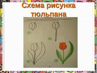 Схема рисунка тюльпана