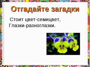Отгадайте загадки Стоит цвет-семицвет, Глазки-разноглазки.