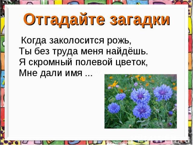 Отгадайте загадки Когда заколосится рожь, Ты без труда меня найдёшь. Я скромный полевой цветок, Мне дали имя ...