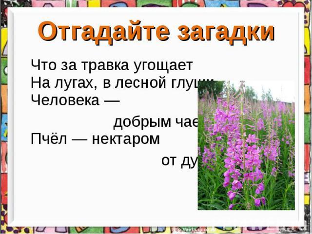 Отгадайте загадки Что за травка угощает На лугах, в лесной глуши Человека — добрым чаем, Пчёл — нектаром от души.