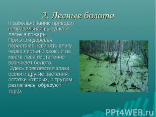 2. Лесные болота К заболачиванию приводит неправильная вырубка и лесные пожары.
