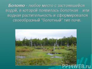 Болото - любое место с застоявшейся водой, в которой появилась болотная или водн