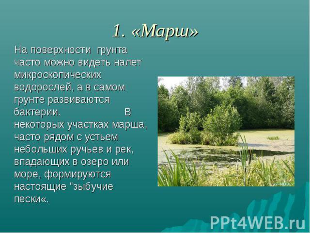 1. «Марш» На поверхности грунта часто можно видеть налет микроскопических водорослей, а в самом грунте развиваются бактерии. В некоторых участках марша, часто рядом с устьем небольших ручьев и рек, впадающих в озеро или море, формируются настоящие