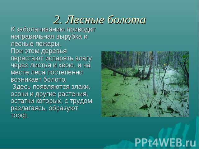 2. Лесные болота К заболачиванию приводит неправильная вырубка и лесные пожары. При этом деревья перестают испарять влагу через листья и хвою, и на месте леса постепенно возникает болото. Здесь появляются злаки, осоки и другие растения, остатки кото…