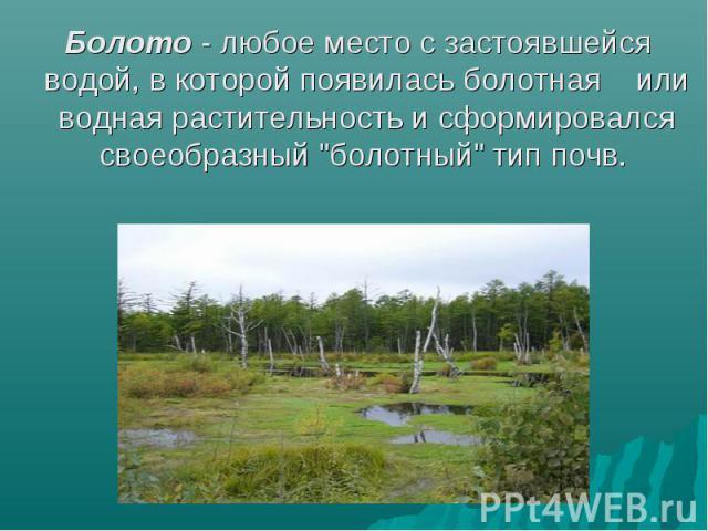 Болото - любое место с застоявшейся водой, в которой появилась болотная или водная растительность и сформировался своеобразный