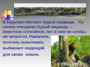 В Карелии обитают бурые медведи. По своим повадкам бурый медведь – животное спок