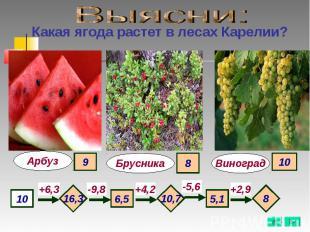 Выясни: Какая ягода растет в лесах Карелии?