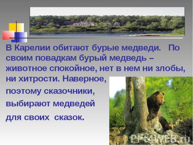 В Карелии обитают бурые медведи. По своим повадкам бурый медведь – животное спокойное, нет в нем ни злобы, ни хитрости. Наверное, поэтому сказочники, выбирают медведей для своих сказок.