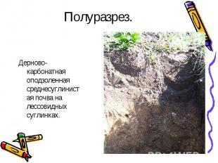 Полуразрез.Дерново-карбонатная оподзоленная среднесуглинистая почва на лессовидн