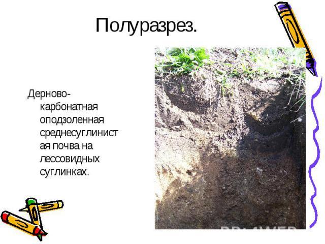 Полуразрез.Дерново-карбонатная оподзоленная среднесуглинистая почва на лессовидных суглинках.