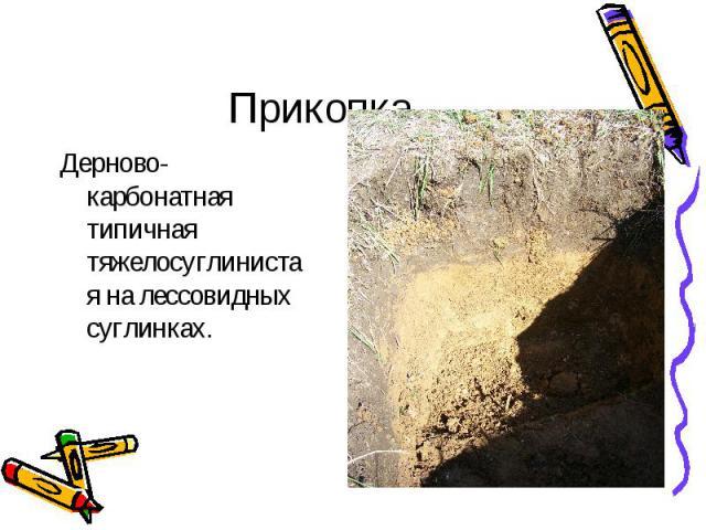 Прикопка Дерново-карбонатная типичная тяжелосуглинистая на лессовидных суглинках.