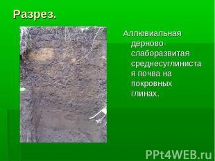 Разрез. Аллювиальная дерново-слаборазвитая среднесуглинистая почва на покровных