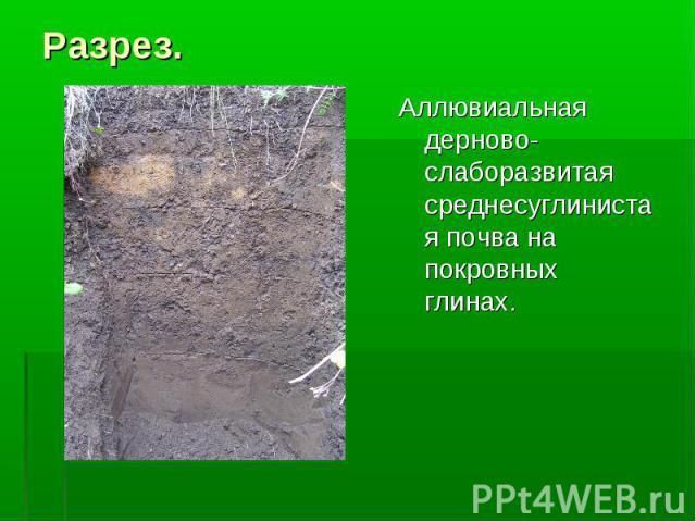 Разрез. Аллювиальная дерново-слаборазвитая среднесуглинистая почва на покровных глинах.