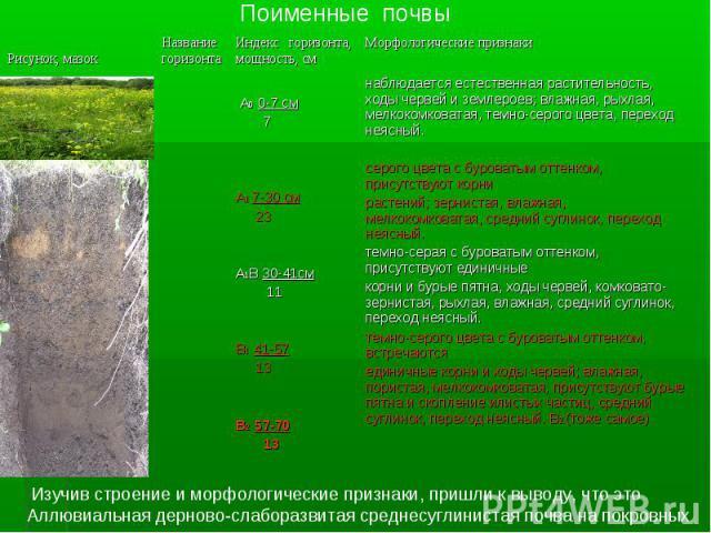 Поименные почвы Изучив строение и морфологические признаки, пришли к выводу, что это Аллювиальная дерново-слаборазвитая среднесуглинистая почва на покровных глинах.