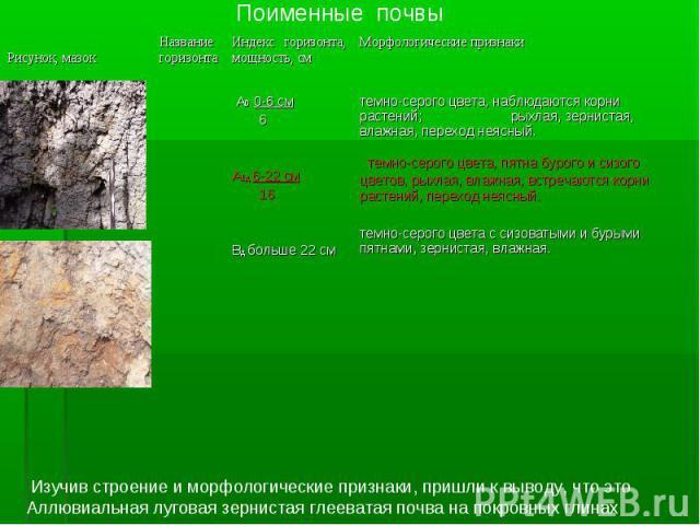 Поименные почвы Изучив строение и морфологические признаки, пришли к выводу, что это Аллювиальная луговая зернистая глееватая почва на покровных глинах