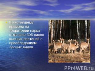 К настоящему времени на территории парка отмечено 505 видов высших растений с пр