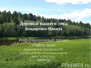 Деревья нашего леса Бондаренко Никита Информационный проект «Тайны леса» Руковод