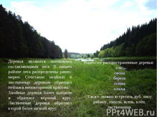 Деревья являются основными составляющими леса. В нашем районе леса распределены