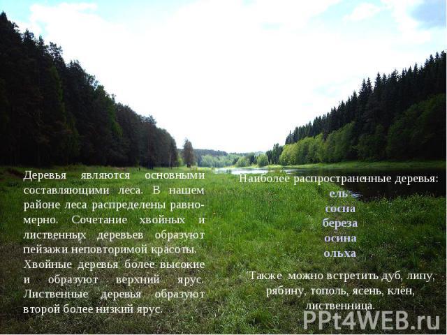 Деревья являются основными составляющими леса. В нашем районе леса распределены равно-мерно. Сочетание хвойных и лиственных деревьев образуют пейзажи неповторимой красоты. Хвойные деревья более высокие и образуют верхний ярус. Лиственные деревья обр…