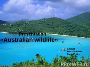 Presentation «Australian wildlife» Aminat Musulmanova Form11 «А»