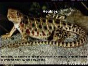 Reptiles More than 400 species of reptiles are known in Australia. Some are simi