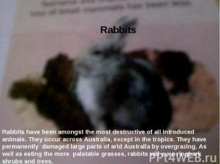 Rabbits  Rabbits have been amongst the most destructive of all introduced anima
