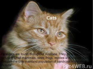 Cats Feral cats are found throughout Australia. They kill many animals including