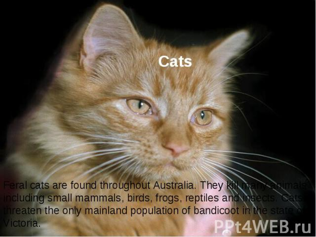Cats Feral cats are found throughout Australia. They kill many animals including small mammals, birds, frogs, reptiles and insects. Cats threaten the only mainland population of bandicoot in the state of Victoria.