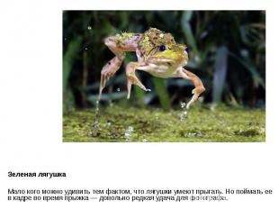 Зеленая лягушка Мало кого можно удивить тем фактом, что лягушки умеют прыгать. Н
