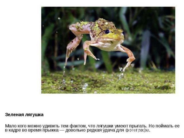 Зеленая лягушка Мало кого можно удивить тем фактом, что лягушки умеют прыгать. Но поймать ее в кадре во время прыжка — довольно редкая удача для фотографа.