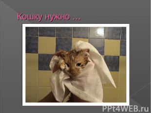 Кошку нужно …