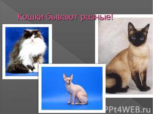 Кошки бывают разные!