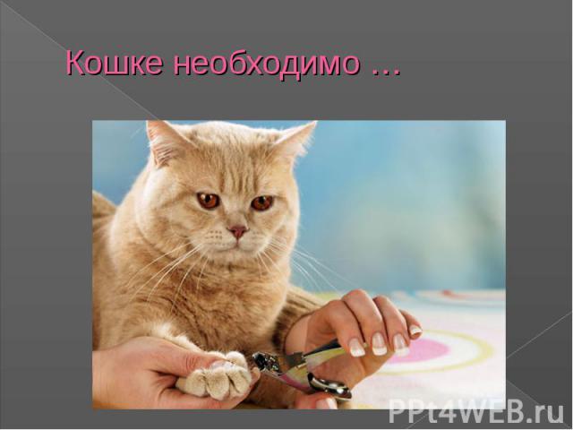 Кошке необходимо …
